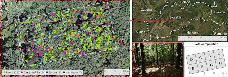 mapa 3D de un bosque con sensor LIDAR